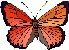 http://www.christourhope.org/butterfly2.gif