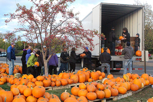 Pumpkin unloading photo